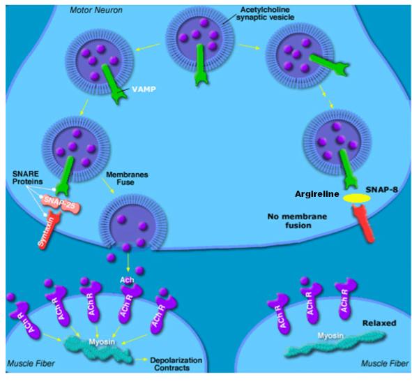 tableta de vierme dechinel virus hpv bucal